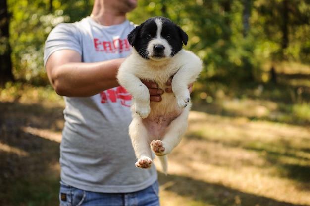 Equipaggi la tenuta del cucciolo bianco piccolo con una testa nera nella foresta