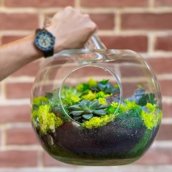 Uomo che tiene la pianta del terrario in vetro