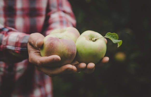 Un uomo tiene in mano un raccolto di mele.