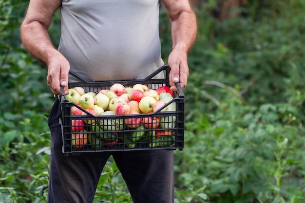 L'uomo tiene una scatola di plastica con mele, cetrioli e zucchine