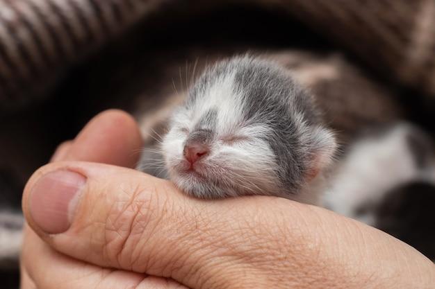 Un uomo tiene in mano un piccolo gattino appena nato