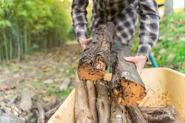 Uomo che sposta i tronchi sulla sua carriola gialla lumberjack woodcutter con stivali e camicia quadrata
