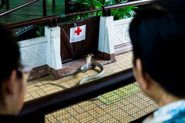 Uomo che esegue uno spettacolo di serpenti