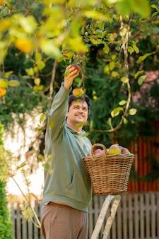 L'uomo raccoglie le mele in un cesto in giardino