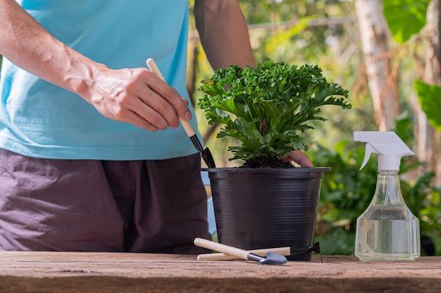 Uomo che pianta bonsai