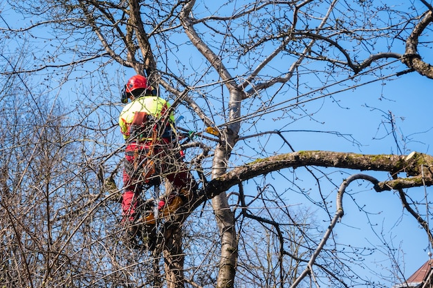 Uomo che pota le cime degli alberi usando una sega, boscaiolo che indossa indumenti protettivi e sega rami.
