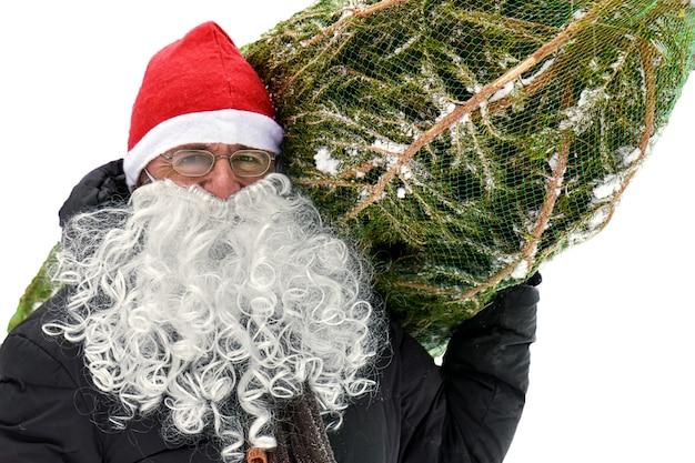 Un uomo con un cappello da babbo natale rosso e una barba bianca finta porta un albero di natale imballato in una griglia sulla spalla isolata su sfondo bianco.