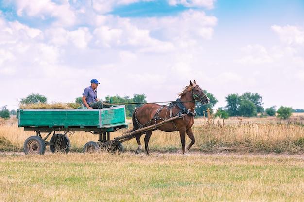 Un uomo cavalca un vecchio carro attraverso la campagna.
