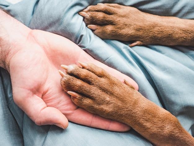 Le mani dell'uomo che tengono le zampe di un giovane cucciolo