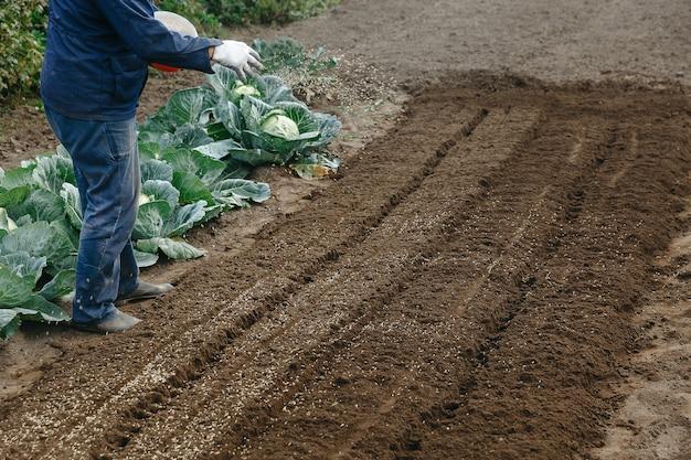 L'uomo semina la segale nel giardino del giardino