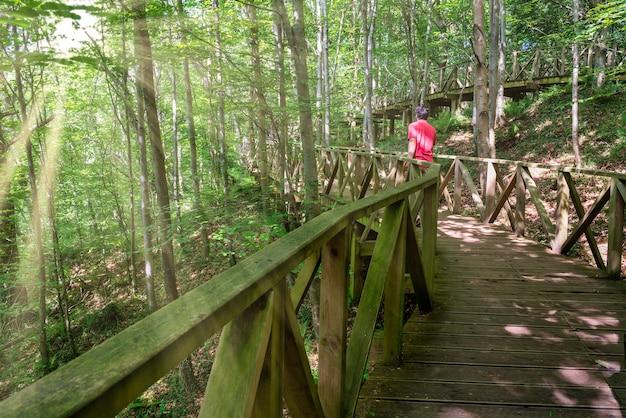 Uomo che cammina lungo la passerella di legno nel mezzo della foresta di sequoie in cantabria spain