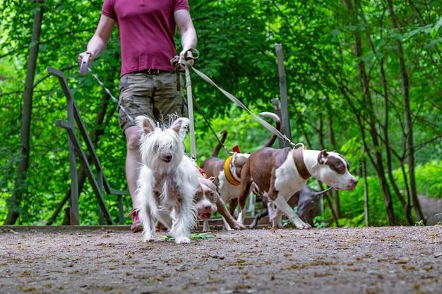 Uomo che cammina cani nel parco