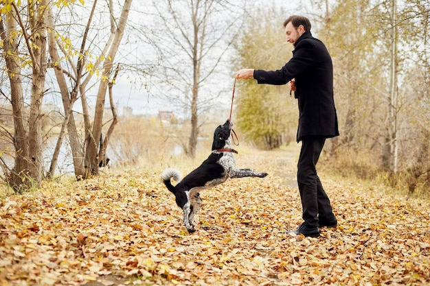 L'uomo cammina in autunno con un cane spaniel con le orecchie lunghe nel parco in autunno. il cane si diverte e gioca sulla natura nel fogliame giallo autunnale, russian spaniel guarda il suo proprietario