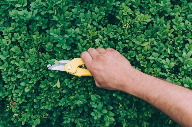 Un uomo con le forbici taglia le piante verdi.