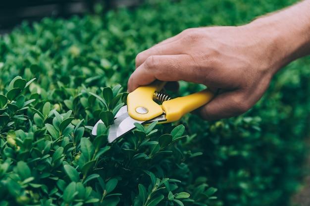 L uomo con le forbici taglia le piante verdi