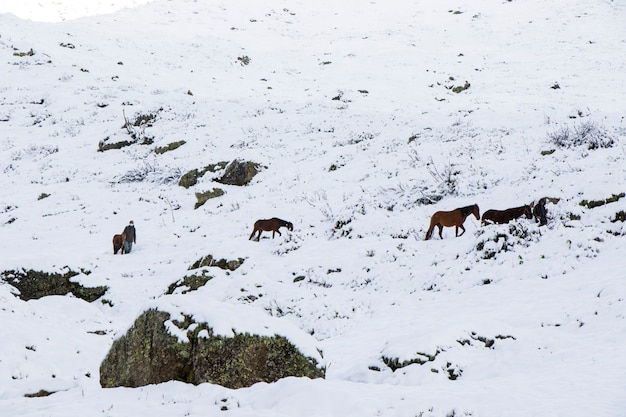 Uomo con cavalli nella neve nelle montagne della georgia