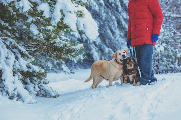 Uomo con due cani che camminano nella foresta innevata in inverno
