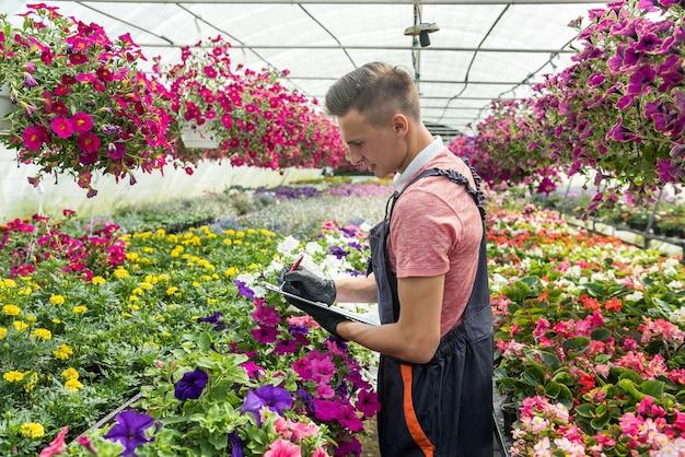 Uomo che lavora nella soleggiata aranciera piena di fiori controlla le condizioni delle piante in serra industriale