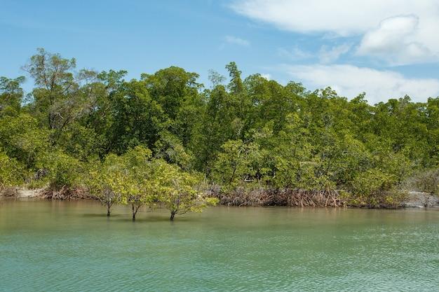 Foto di mangrovie. mangrovie. allevamento di granchi