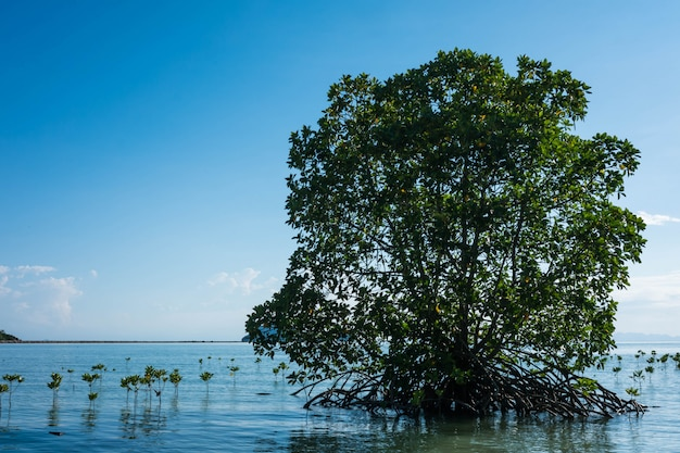 Radici di mangrovie sparse sulla spiaggia.