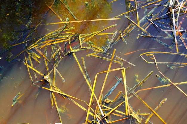 Dettaglio tropicale dell'acqua della palude della mangrovia