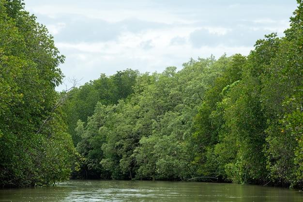 Alberi di mangrovie e foreste di mangrovie chanthaburi thailandia