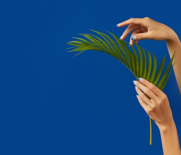 Mani della donna ben curate che tengono la foglia di palma su sfondo blu