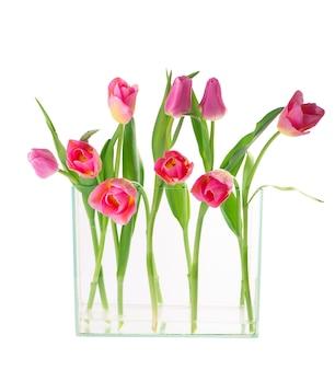 Molti bei tulipani con foglie in un vaso di vetro isolato su sfondo trasparente. foto orizzontale con fiori freschi di primavera per qualsiasi design festivo