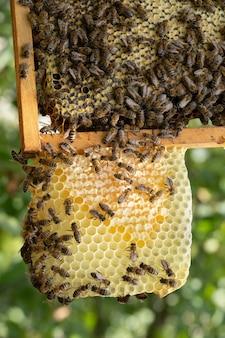 Molte api lavorano sui favi, nell'apiario, in primo piano.