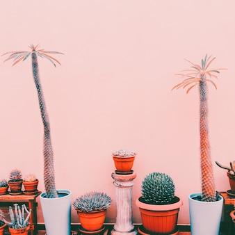 Molti cactus e palme su sfondo rosa. piante sul concetto minimo di moda rosa. home decor