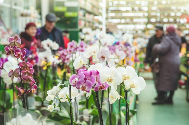 Molte orchidee colorate in una pentola nel negozio, primi piani. giardino botanico, floricoltura, concetto di industria orticola