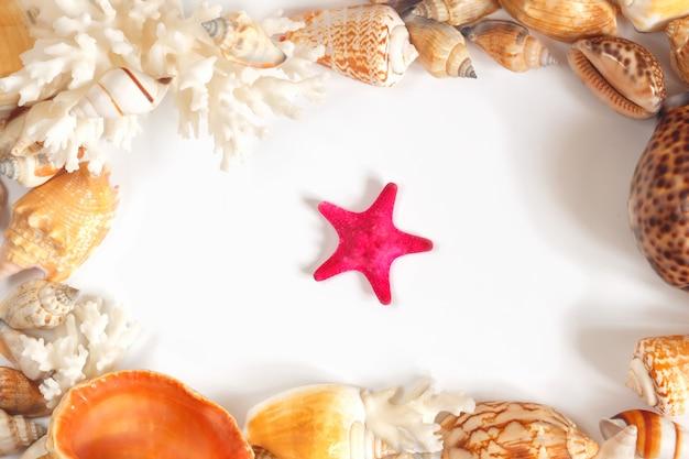Molte conchiglie colorate diverse scheletro calcico di polipi di coralli e stelle marine. composizione del mare.
