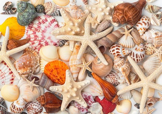 Molte diverse conchiglie e stelle marine di diverse forme e colori. primo piano, vista dall'alto.