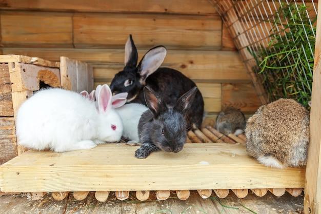Molti diversi piccoli conigli di alimentazione nella fattoria degli animali nella conigliera