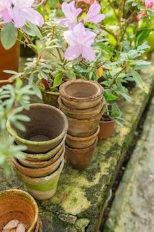 Molti vasi e fiori in ceramica vuoti su cemento in serra.