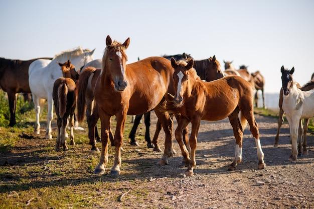 Molti cavalli stanno su una strada di campagna