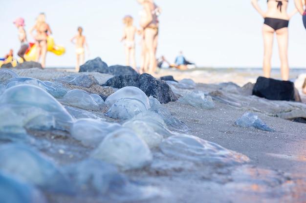 Molte grandi meduse e persone in piedi sulla spiaggia sabbiosa.