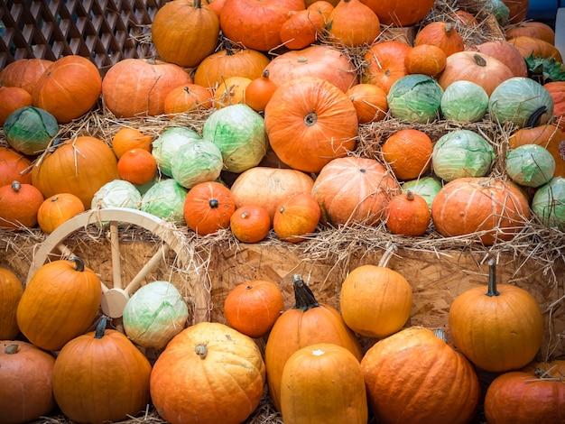 Molte grandi zucche arancioni si trovano nella paglia. raccolta autunnale di zucche preparate per la festa.