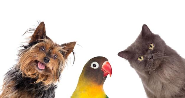 Molti animali domestici isolati