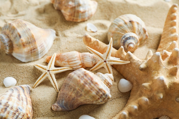 Molte conchiglie e stelle marine su sabbia di mare, primo piano.