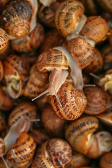 Molte lumache come sfondo, vista dall'alto