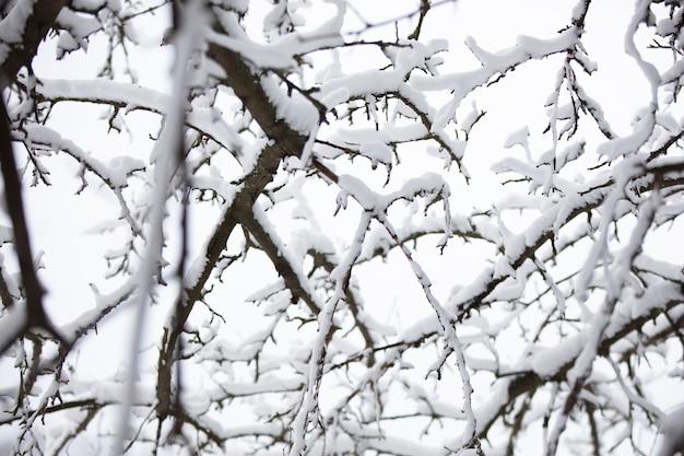 Molti rami di albero nella neve invernale. sfondo invernale.