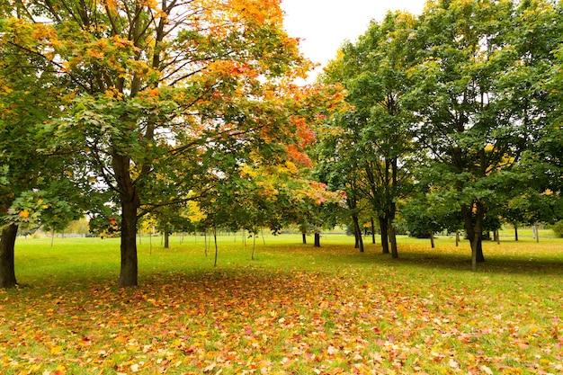 Acero in autunno. bellissimo sfondo naturale di alberi.