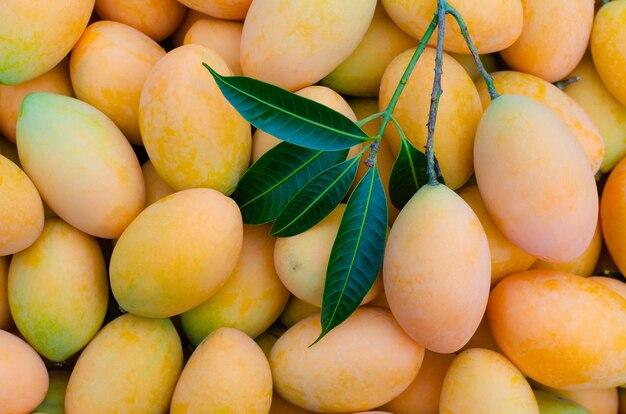Sfondo di frutta prugna mariana