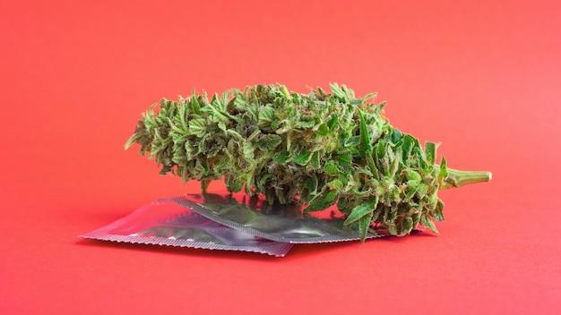 Germogli di marijuana e preservativi, contraccezione sessuale e di droga.