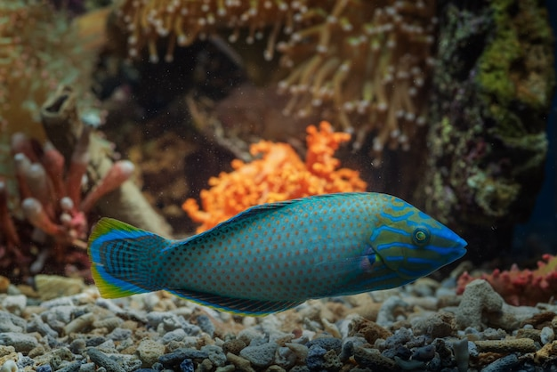 Pesci marini con bellissimi colori