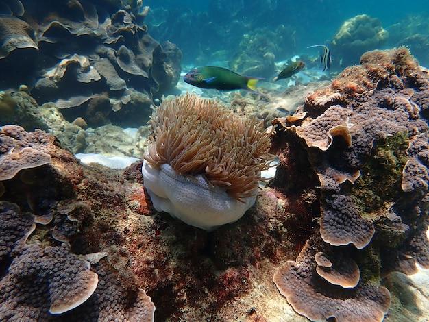 Vita marina sotto l'acqua di mare