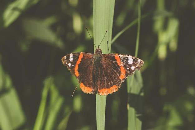 Mariposa de color marron y naranja encima de una hoja