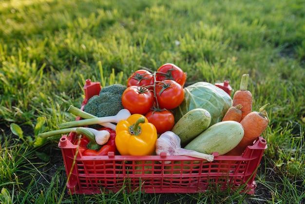 Marsh box con verdure mature e belle raccolte da un giardino ecologico. uno stile di vita sano. cibo ecologico e sano.