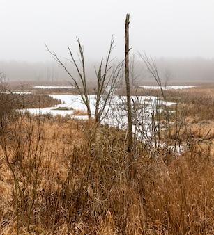 Zona paludosa ricoperta di ghiaccio dalla neve nella stagione invernale, dettagli della natura